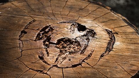 A picture of decaying wood