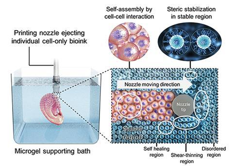 An image showing  living stem cells that can be printed as a bioink by themselves without a carrier macromer solution into a photocurable