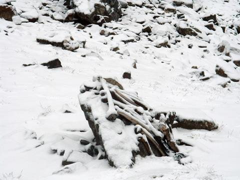 An image showing snow-covered disarticulated skeletal elements at Roopkund Lake