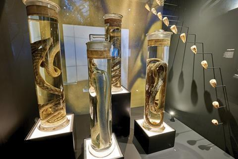 Preserved venomous snakes at the Venom exhibition, Natural History Museum, London