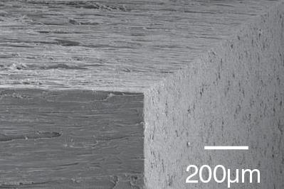 An SEM image of the cooling wood showing the aligned wood channels