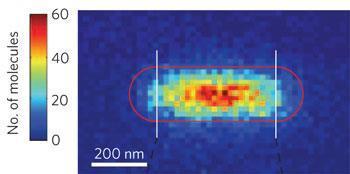 Histogram-of-nanorod_Nature-Nano_350