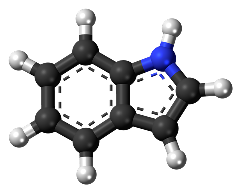 Ball-and-stick model of the indole molecule, a nitrogen heterocycle and a simple aromatic ring.