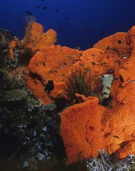 sea-sponge-275