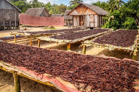 Vanilla dried on the tables in the small village in Madagascars Vanilla Coast near Mananara