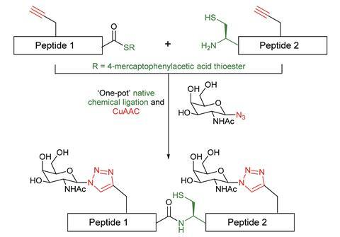 A scheme showing the one-pot synthesis of 'click' neoglycopeptides employing CuAAC 'click' chemistry and native chemical ligation (NCL)