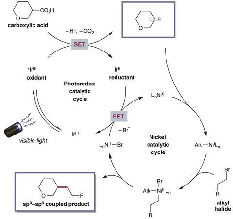 Proposed mechanism for metallaphotoredox-mediated cross-coupling of carboxylic acids