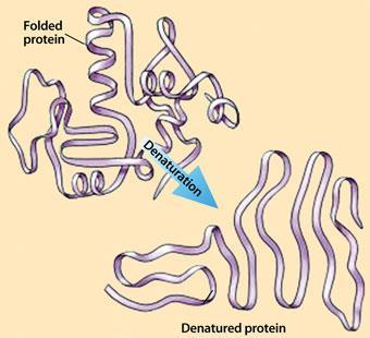 feature protein denaturation 340
