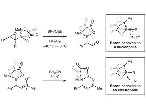 Amine hemilability enables boron to mechanistically resemble either hydride or proton