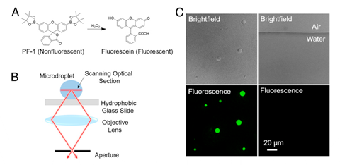 An image showing fluorescence imaging of spontaneous generation of hydrogen peroxide in aqueous microdroplet