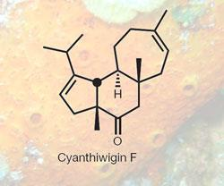 CYANTHIWIGIN-250