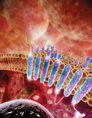 FEATURE-GPCR-300