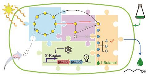 A graphical abstract representing modular engineering for efficient photosynthetic biosynthesis