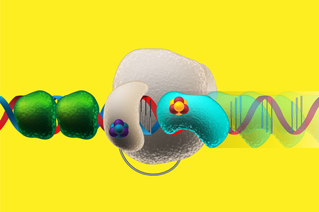 DNA wire passes charge signal to protein to activate replication