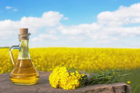 A bottle of rapeseed (canola) oil with flowering rapeseed