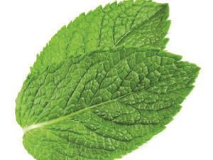 Menthol leaf