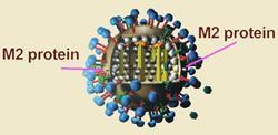 M-protein-250