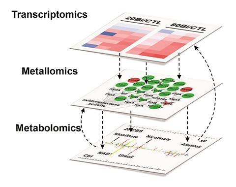Multi-omics and temporal dynamics profilin