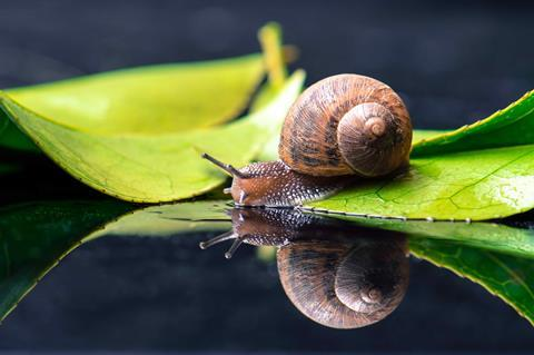 Snail shells are examples of macroscopic chirality found in nature