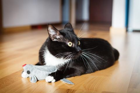 A black and white cat playing with a mouse-shaped toy