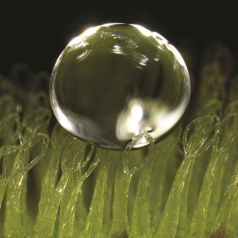 Water droplet on eggbeater-shaped superhydrophobic trichomes - Figure 1b - Full image