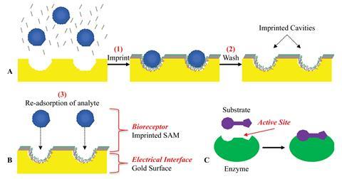 Schemes showing the molecular imprinting process of the analyte and self-assembled monolayer of alkanethiols on the gold surface