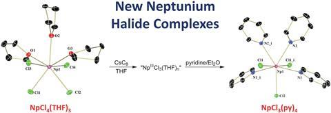 A scheme showing the synthesis of new neptunium halide complexes