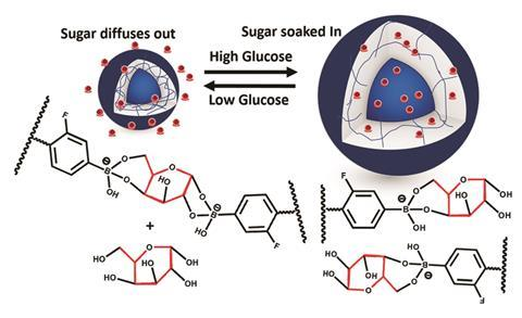 A scheme showing that the nanogel reacts to glucose levels by swelling or shrinking