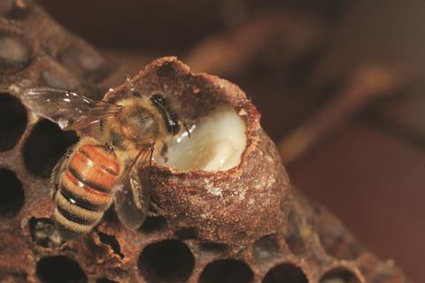 Honey Bee with royal jelly (c0086508)