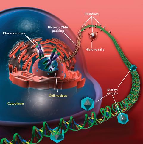 Cellular DNA and epigenetics diagram with text (c0270577)