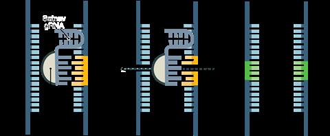 cw sept18 feature crispr diagram recolour grey