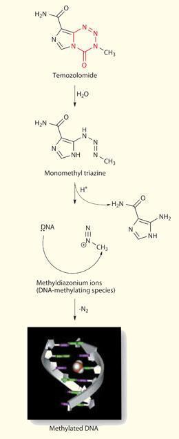 FEATURE-temozolomide-260