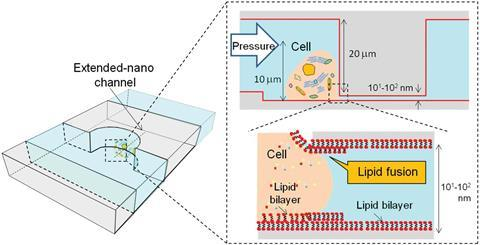 A diagram of the lipid bilayer coated nanopipette