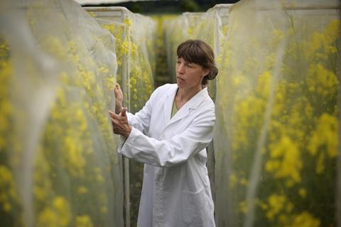 Scientist examines oilseed rape (canola) trials