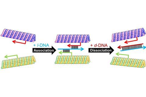Swarming DNA aided microtubules