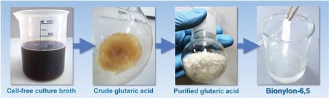 Downstream purification of bio-based glutaric acid and polymerization into nylon-6,5. Crude glutaric acid was recovered from the broth by a two-step acidification and vacuum concentration procedure. Purified glutaric acid was obtained by crystallization.