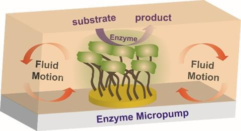 Immobilized catalytic enzyme pumps schematic