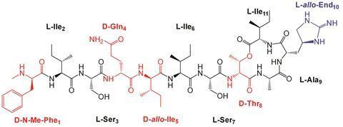 Teixobactin analogues