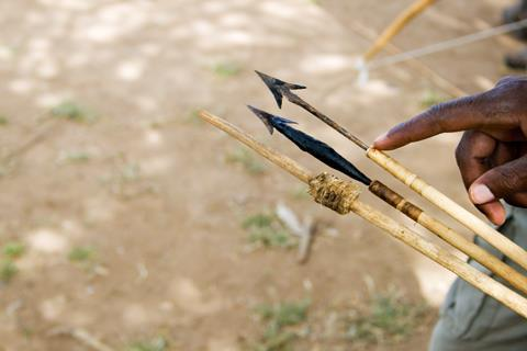 A Hadzabe bushman shows different poisoned arrows used for hunting by the Hadzabe tribe, Tanzania