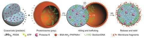 Design & construction of a predator-prey synthetic protocell community - Fig1