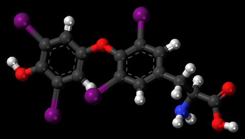 Levothyroxine Ball and Stick 3D