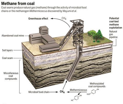 Bacteria turn coal chemicals into methane