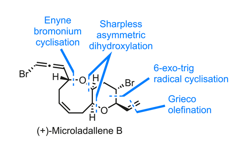 Structure of microladallene B showing the key bond disconnections