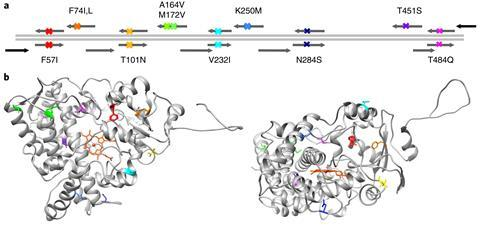Strategy for CLADE using site directed mutagenesis
