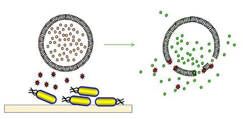 Cartoon of bacterial toxins rupturing a vesicle to release fluorescent dye