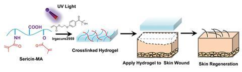 The hydrogel promotes rapid, efficient, and functional skin regeneration