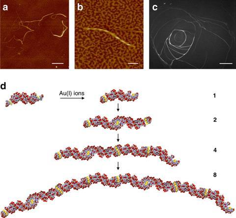 Semiconducting DNA