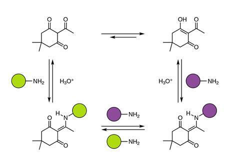 Reversible, dynamic covalent diketoenamine bonds. Diketoenamine bonds form spontaneously from triketones and both aromatic and aliphatic amines. Under strongly acidic conditions in water, the diketoenamine bond hydrolyses to the triketone and an ammonium
