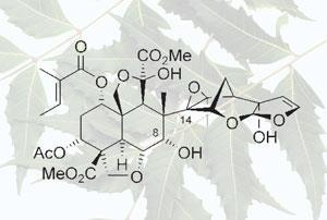 neem-azadirachtin-300