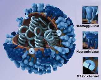 FEATURE-flu-325